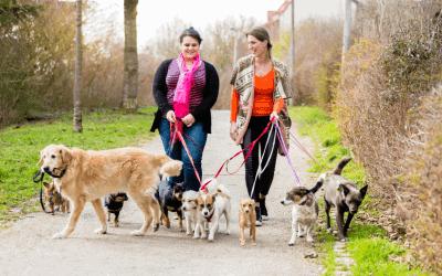Een roedel honden en de 3 wetmatigheden