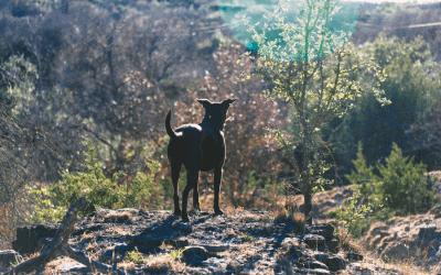 De oersymboliek van de hond