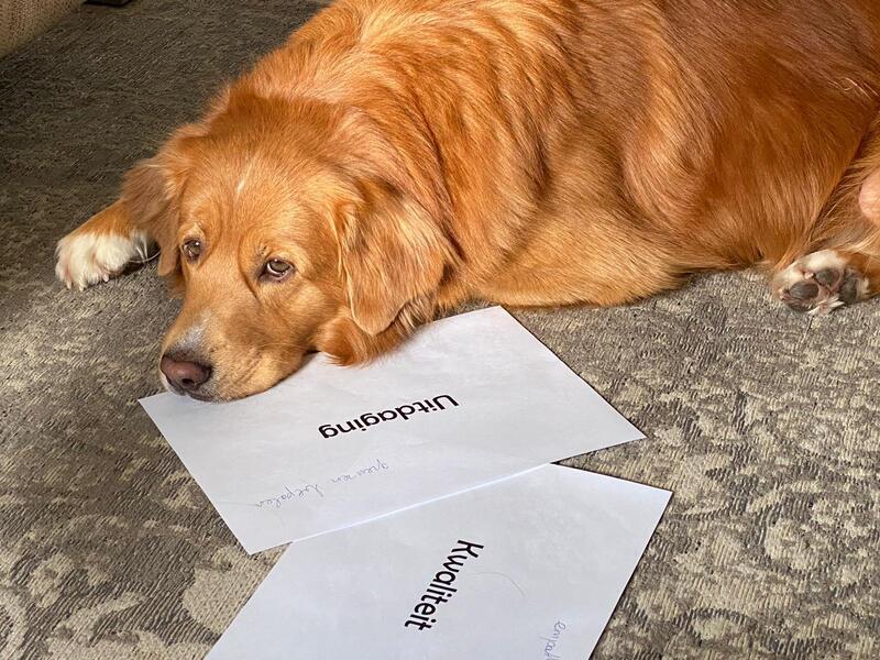 Het welzijn van honden in coaching